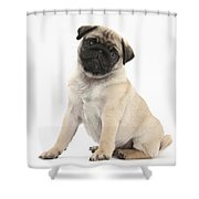 Fawn Pug Pup Shower Curtain