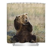 Grizzly Bear Ursus Arctos Horribilis Shower Curtain