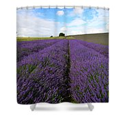 Lavenders Shower Curtain