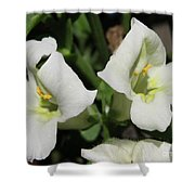 Snapdragon From The Mme Butterfly Mix Shower Curtain