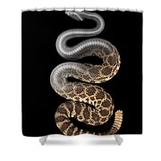 Southern Pacific Rattlesnake X-ray Shower Curtain