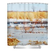 7 Swans Swimming  Shower Curtain