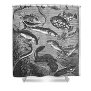 Verne: 20,000 Leagues Shower Curtain by Granger