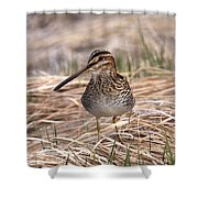 Wilsons Snipe Shower Curtain