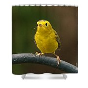 Wilson's Warbler Shower Curtain