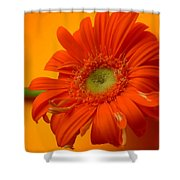 7335 Shower Curtain