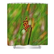 8- Dragonfly Shower Curtain