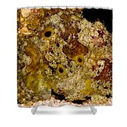 Frogfish Shower Curtain