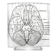 Illustration Of Cranial Nerves Shower Curtain
