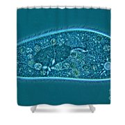 Paramecium Caudatum Shower Curtain by M. I. Walker