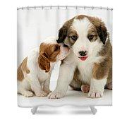 Puppies Shower Curtain by Jane Burton