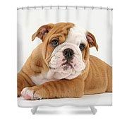 Bulldog Pup Shower Curtain