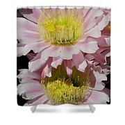 Pink Cactus Flowers Shower Curtain