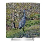 9- Sandhill Crane Shower Curtain