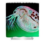 Water Flea Daphnia Magna Shower Curtain