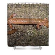 West Virginia Spring Salamander Shower Curtain