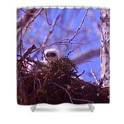 A Baby Red Tail Gazing From Its Nest Shower Curtain