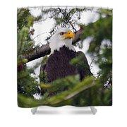 A Bald Eagle Shower Curtain