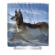 A Barbed Wire Fence Is An Obstacle Shower Curtain