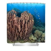 A Barrel Sponge Attached To A Reef Shower Curtain