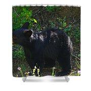 A Bear Cub Shower Curtain