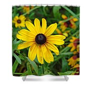 A Beautiful Close Up Of A Sunflower Shower Curtain