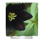 A Beautiful Fritillaria Camschatcensis Shower Curtain