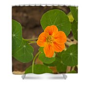 A Beautiful Orange Trumpet Shaped Flower With Green Leaves Shower Curtain