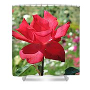 A Beautiful Red Flower Growing At Home Shower Curtain