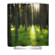 A Beautiful Wooded Area Shower Curtain