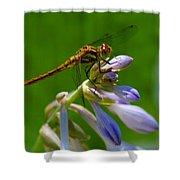 A Beauty On A Beauty Shower Curtain