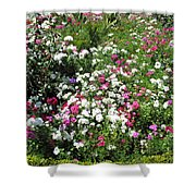 A Bed Of Beautiful Different Color Flowers Shower Curtain