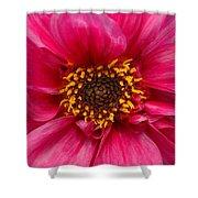 A Big Pink Flower Shower Curtain