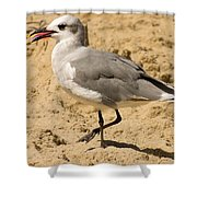 A Bird Of Many Colors Shower Curtain