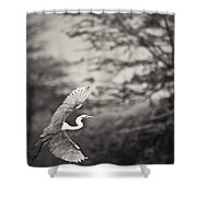 A Bird With A Large Wing Span Takes Shower Curtain