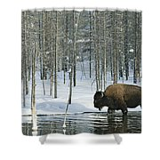 A Bison Stands In A Cold  Stream Shower Curtain