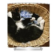 A Black-and-white Domestic Short-hair Shower Curtain