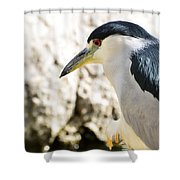 A Black-crowned Night Heron  Shower Curtain