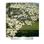 A Blossoming Dogwood Tree In Virginia Shower Curtain