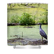 A Blue Bird In A Wetland -yellow-crowned Night Heron  Shower Curtain