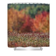 A Blueberry Patch Alongside Maines Shower Curtain