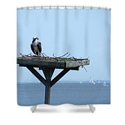 A Boat Watching Osprey Shower Curtain