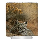 A Bobcat Shower Curtain