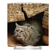 A Bobcat Pokes Out From Its Alcove Shower Curtain