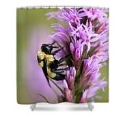 A Bombus Bumblebee On A Shower Curtain
