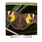 A Brightly Colored Brown And Yellow Shower Curtain