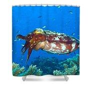 A Broadclub Cuttlefish, Kimbe Bay Shower Curtain