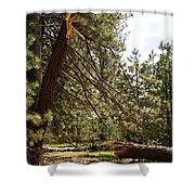 A Broken Tree Shower Curtain