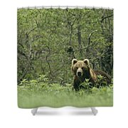 A Brown Bear In Tall Grasses Shower Curtain