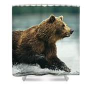 A Brown Bear Rushing Through Water Shower Curtain